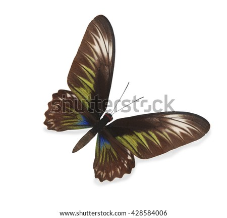 Brown and green butterfly isolated on white - stock photo