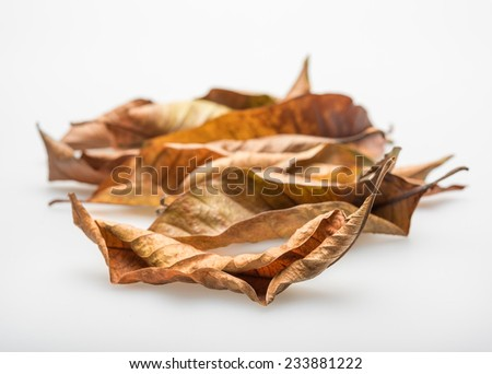 Brown and yellow dried leaves.
