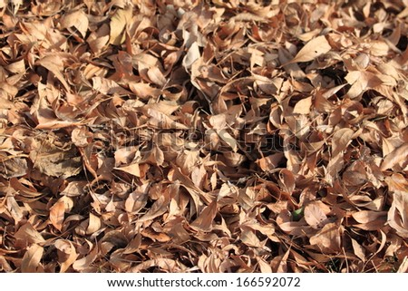 Brown autumn leafs as a background image.