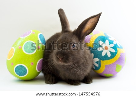 Brown baby bunny rabbits pose with colorful Easter eggs