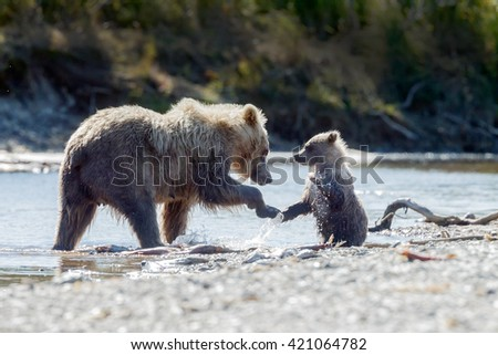 Brown bear female and her cub