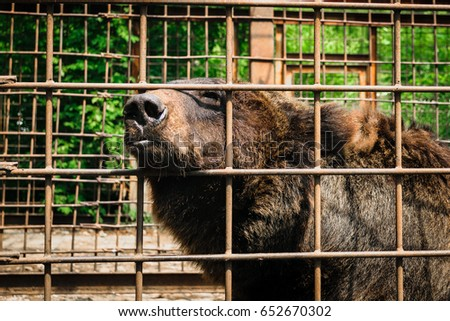 brown bear in the zoo,