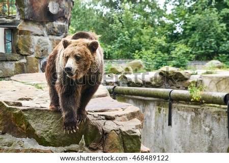 brown bear is on the dais at the zoo
