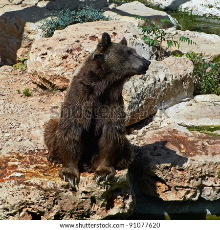 brown bear is walking next to the water - stock photo