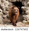 Brown bear (Ursus arctos) front view - stock photo