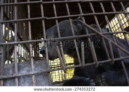 Brown bear (Ursus arctos) imprisoned in a cage - stock photo
