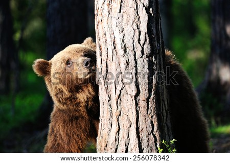 Brown bear with a tree - stock photo