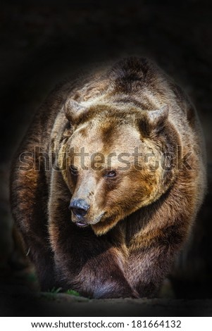 brown bear with dark background - stock photo