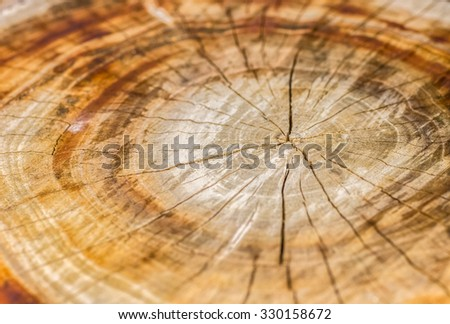 Brown beautiful slice stump with beautiful wood structure
