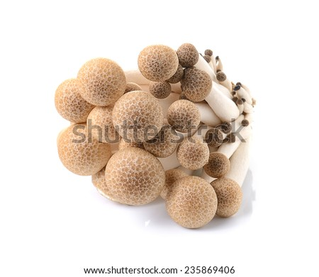 brown beech mushroom isolated on white background - stock photo