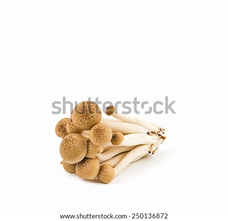 Brown beech mushrooms isolated on white background - stock photo