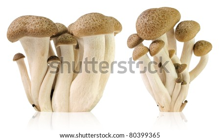 Brown beech mushrooms, Shimeji mushroom, Edible mushroom - stock photo