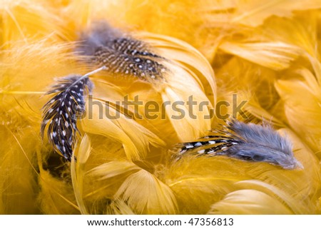 brown bird feathers over orange feathers background - stock photo
