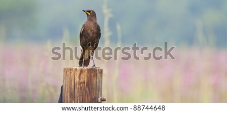 Brown bird sitting on a pole in die bush - stock photo