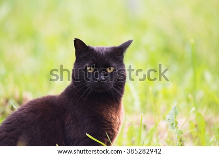 Brown black cat country farm grass - stock photo
