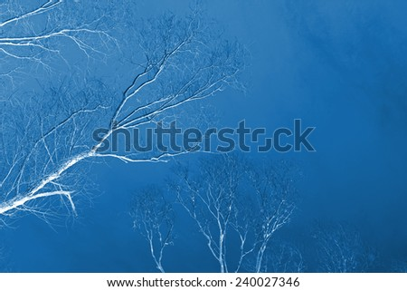 brown branches of a tree under the blue sky