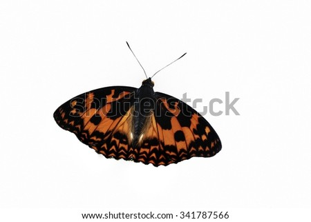 Brown Butterfly  Isolated on White