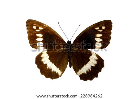 brown butterfly isolated, set of realistic tropical butterfly and insect, zoology,wild ,entomology, alive exotic with beautiful wing collection ,insect animal stuff icon,bug life