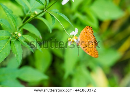 Brown butterfly on flower in garden, Thailand