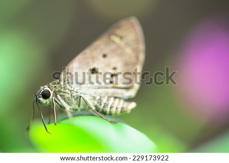 Brown butterfly on green leaf in flower garden - stock photo