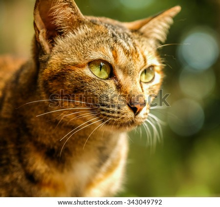 brown cat