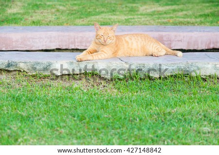 Brown cat in the garden