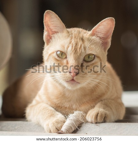 brown cat lying on roof - stock photo