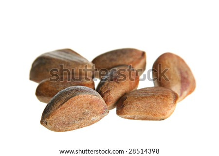 Brown cedar nut fruit on white background