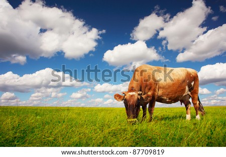 Brown cow grazing on a green meadow - stock photo