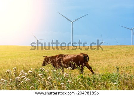Brown cow on the field and eco power, wind turbines - stock photo