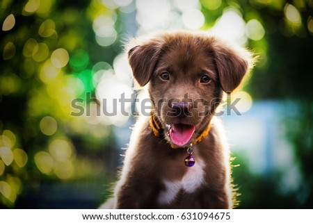 Top Puppy Brown Adorable Dog - stock-photo-brown-cute-labrador-retriever-puppy-dog-looking-withabstract-bokeh-foliage-color-background-631094675  HD_243982  .jpg
