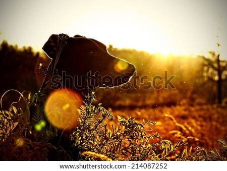 brown doberman puppy dog sitting in the wild with sunlight - stock photo