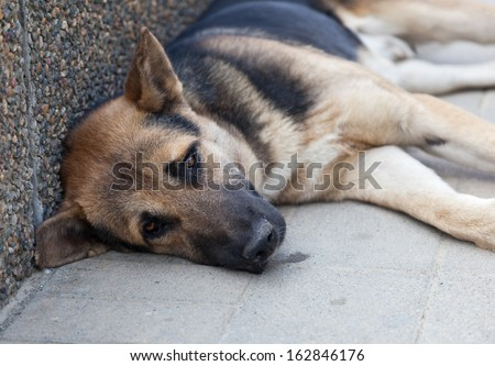 brown dog with sad eyes lays on the sidewalk