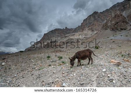 brown donkey on high mountain