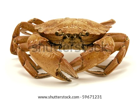 brown dried crab isolated on white background - stock photo