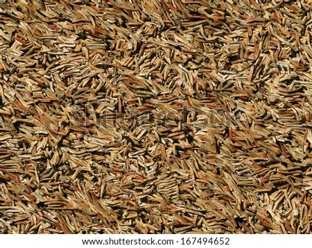 Brown dry pine needles (generated from real foto)