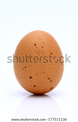 brown egg on a white background - stock photo