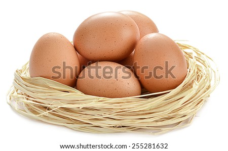 Brown Eggs in Nest - stock photo