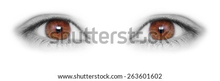 Brown Eyes isolated on white background - stock photo