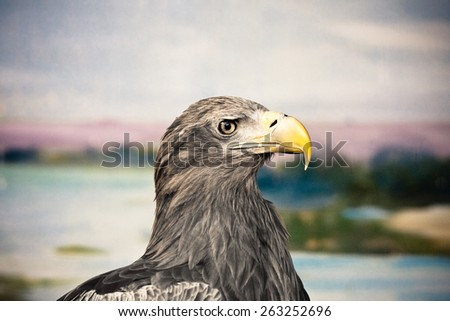 Brown falcon bird animal - stock photo