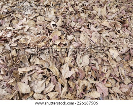 Brown fallen leaves laying on the ground