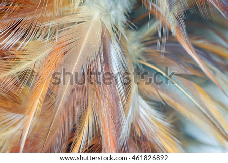 Brown feather vintage color trends texture background
