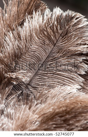 brown feathers of an ostrich - stock photo