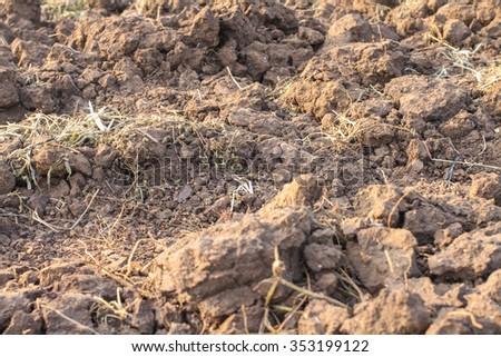 brown fertile  soil for plants - stock photo