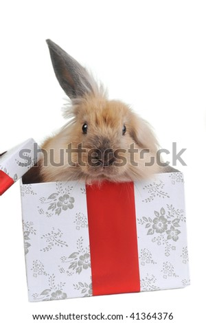 brown  fluffy rabbit sits in  box for  gift - stock photo