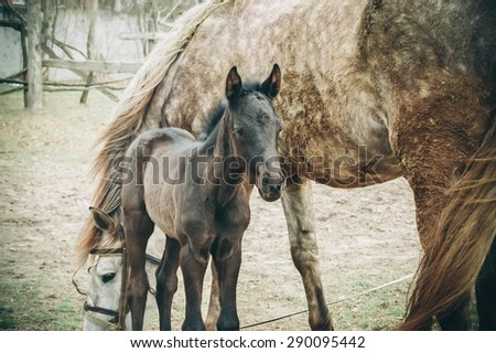 brown foal is about mares, photo filter - stock photo