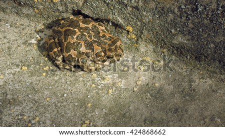 Brown frog or toad sitting motionlessly stationary. Nature wildlife concept. - stock photo