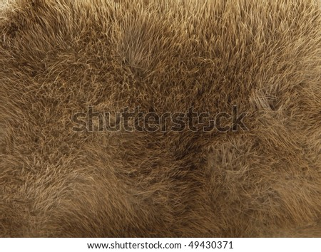 Brown fur texture - stock photo