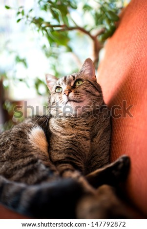 Brown Gray Cat Lounging on Red Arm Chair Near Green Plant - stock photo