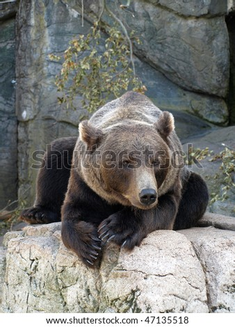 brown grizzly bear sitting on a rock